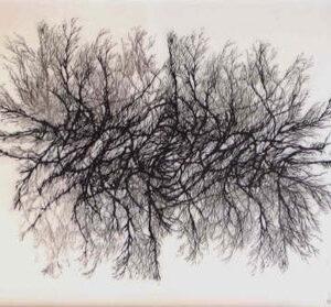 """Sobre el tema de """"radiografías.."""": el árbol"""