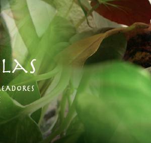 2010 – 17.  El Jardín de las Maravillas / Mercado de creativos